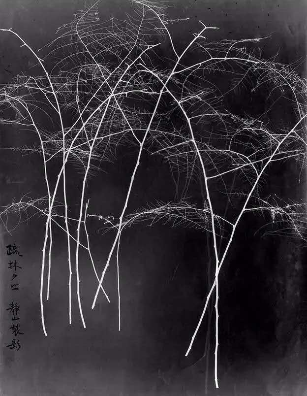 Lang Jingshan - Bosque y ocaso (疏林夕照)